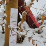 Kalala Organic Estate Winery's Icewines