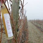 Kalala Organic Estate Winery's Icewine